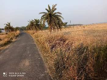 25 bigha agri land sell in sapar near chandrahati bardhaman.