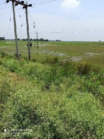 35 Bigha Agriculture land sell in banonabogram ausgram near guskara bardhaman.