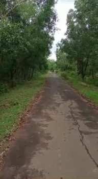 20 Bigha Agriculture land sell in ausgram near mankar college  bardhaman