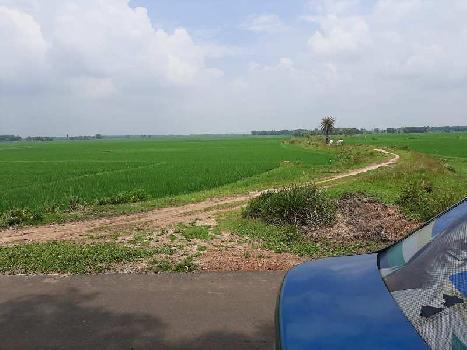 25 bigha agri.Land Sale in anadbazer abhirampur near augram, Bardhaman.
