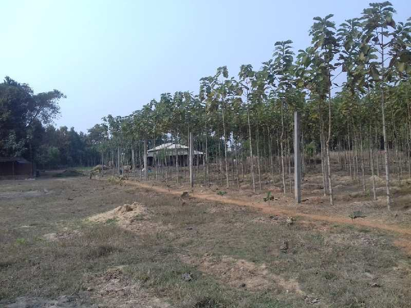 26 Bigha Agriculture land sell in aushgram-II bardhaman.