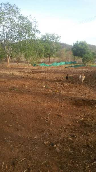 Agricultural Farm Land For Sale In Natham Dindigul