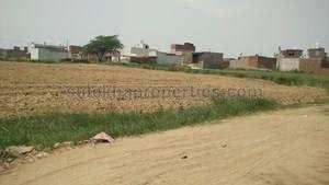 Agricultural Land for Sale in Najafgarh