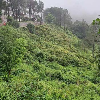 32 biswa land on main dharampur kasauli road