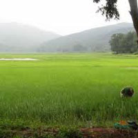 Agricultural Land for Sale in Nashik