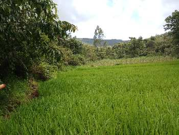 ID 125/02 Agri Land For Sale In Kolhapur District