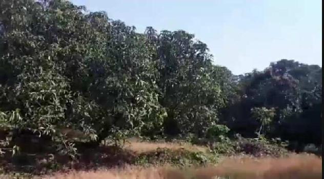 ID 113/51 Ready Mango Farm 30 acres in ratnagiri