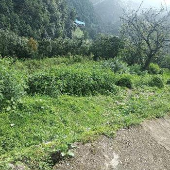 Commercial Lands /Inst. Land for Sale in Uttarakhand