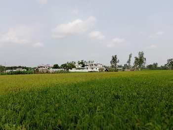 10 Bigha Agricultural/Farm Land for Sale in Garh Mukheshwar, Ghaziabad