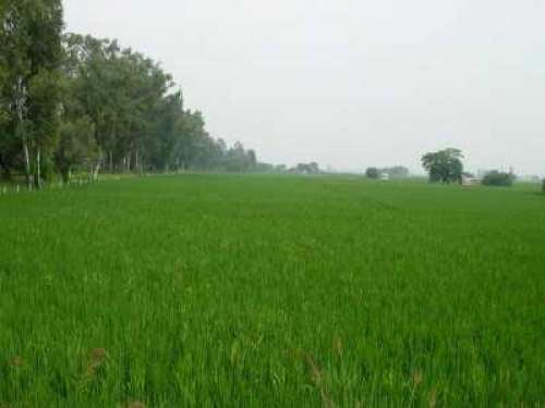 Agricultural Land in Batala for Sale