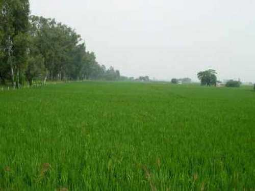 Agricultural Land for Sale in Amritsar