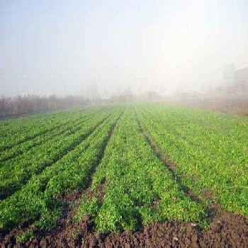 Farm Land For Sale In Old Capital Chandor, South Goa
