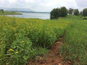 Agricultural/Farm Land for Sale in Igatpuri, Nashik