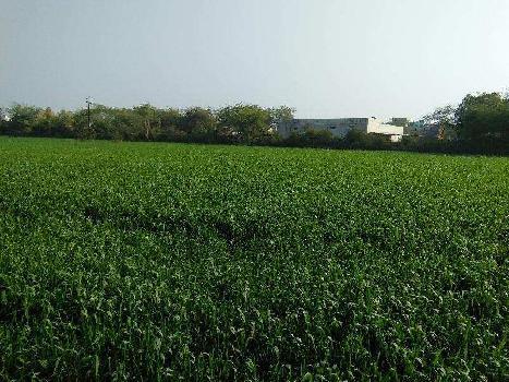Farm Land in Devpura Bundi