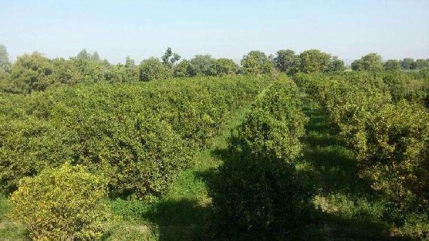 Sale of orange farm land in Bhilwara
