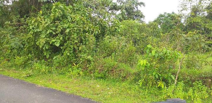 Agricultural/Farm Land for Sale in Sawantwadi, Sindhudurg