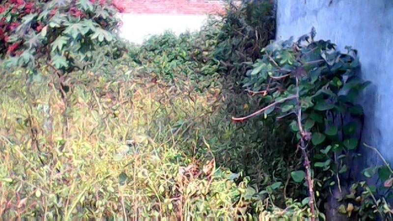 7 marla plot for sale near Rama Mandi