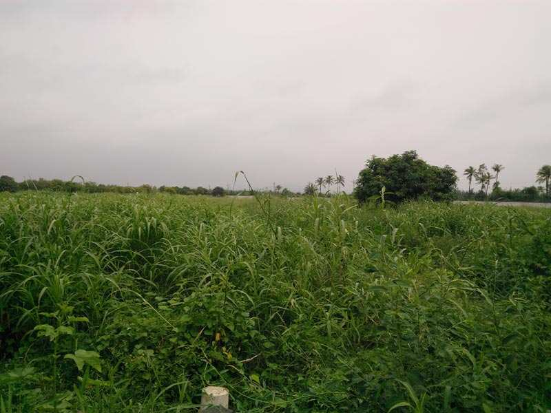 6 Acers Residential NA Land for Sale in Umbergaon.