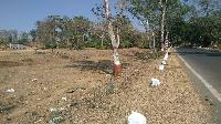 Industrial Land / Plot for Sale in Silvassa
