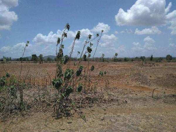 Commercial Lands /Inst. Land for Sale in Gidc, Vapi
