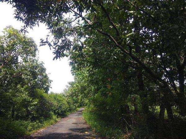 Agricultural/Farm Land for Sale in Sarigam, Valsad