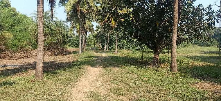 10 Acre Agricultural/Farm Land for Sale in Umbergaon, Valsad